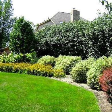37 best images about green fences for back yard on for Garden design ideas with hedges