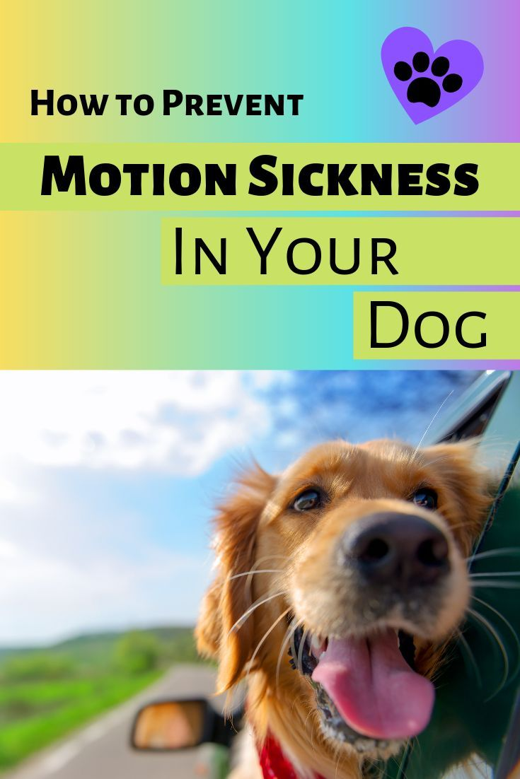 Motion Sickness In Dogs How To Help Prevent Motion Sickness In Dogs Taking Your Dog For A Ride In The Car Should Be A Fun Car Sick Dog Sick Dog