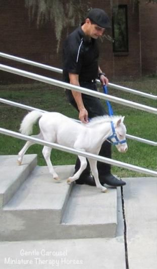 Gentle Carousel provides miniature therapy horses which provide trauma victims and patients in assisted living facilities, hospitals and hospice care