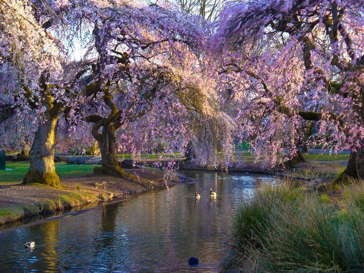 34 best images about spring in oregon on pinterest for Oregon craft floral