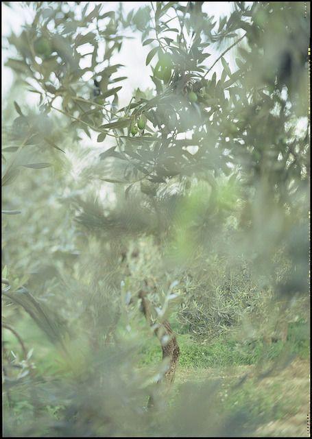 Camouflage, 2003, by Joann Verburg