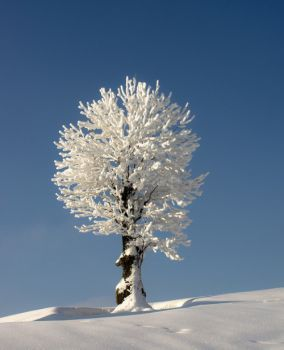 Snowy Tree (30 pieces)
