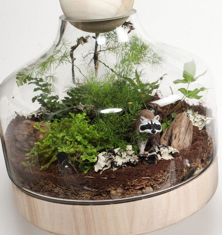Jurassic in a Jar DIY Terrarium Kit by Twig Terrarium | twigterrariums