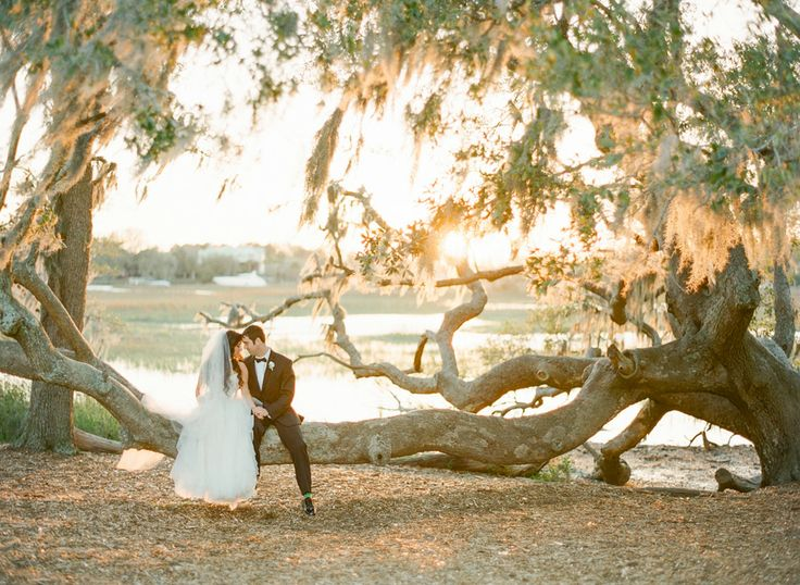 Bride and groom seated on the branch of a live oak with Spanish moss and golden sunlight at Boone Hall Plantation in Charleston, SC. Image by KT Merry.