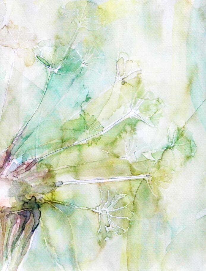 dandelion . watercolour . aquarell . ada k.a