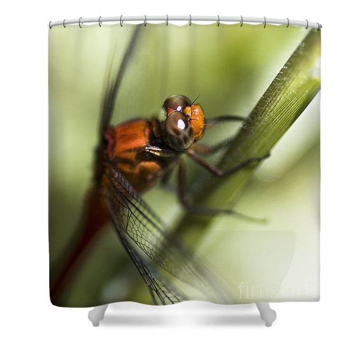 Nature Shower Curtain featuring the photograph Grassblade Dragonfly by Jorgo Photography - Wall Art Gallery