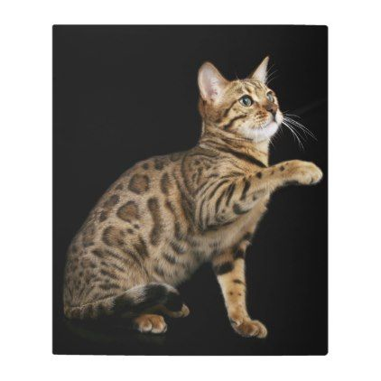 #Posters #Metal #Art - #Bengal cat playing on black background metal print