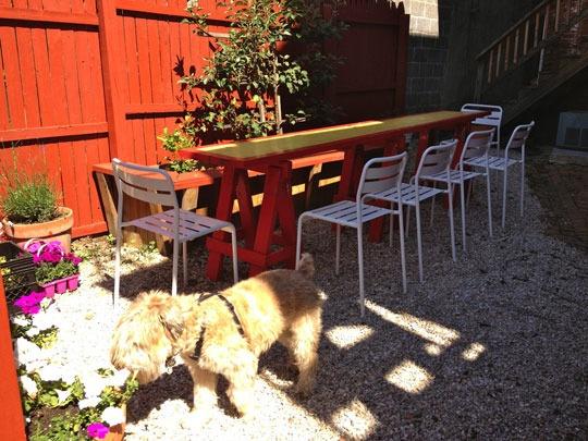 Charming urban patio.  Cool dog, too.