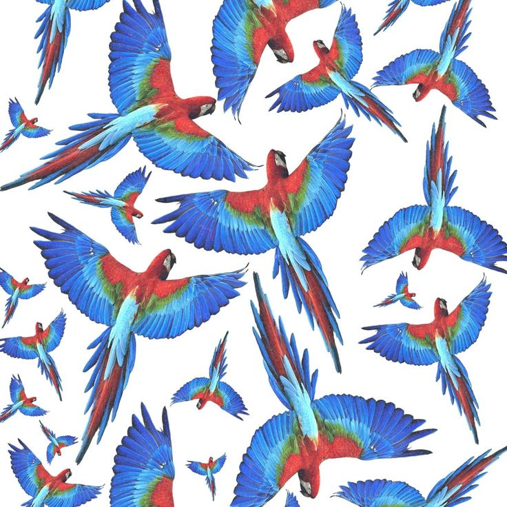 Parrot by @eleaxart - T-agged #pattern #ilustration #design #tshirt