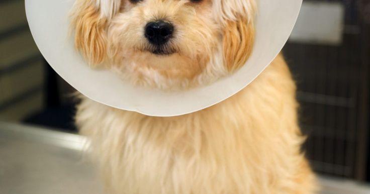 Causas e curas para queda de pelos em cães. A maioria dos cães trocam seu pelo com um processo natural, alguns mais que outros. Se o seu cão está perdendo tufos de pelo, resultando em áreas carecas, feridas e irritações da pele, a causa geralmente é um problema médico, ambiental ou parasitário. Seu cão pode sofrer grande desconforto devido às doenças de pele e perca de pelo. Detectar e ...