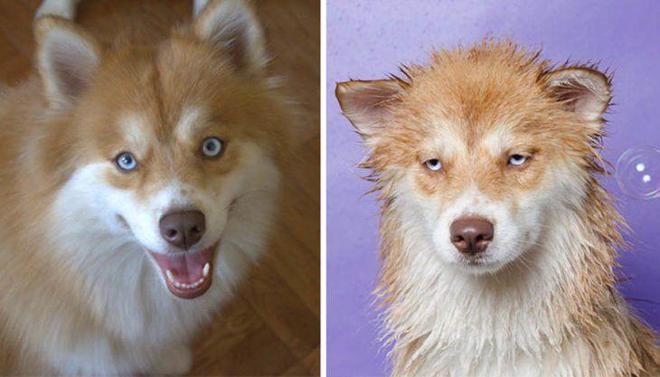 Perrito Sonriendo Antes Del Bano Y Con Cara De Nefasto Durante Su Bano Imagenes De Perros Fotos De Mascotas Fotos De Perros Graciosas