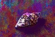 "New artwork for sale! - "" Snail Molluscum Marine Sea Shells  by PixBreak Art "" - http://ift.tt/2v5ywAY"
