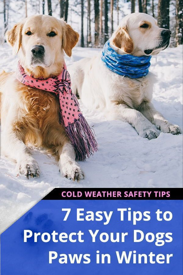7 Best Ways to Protect Your Dogs Paws in Winter | Natural Dog Care