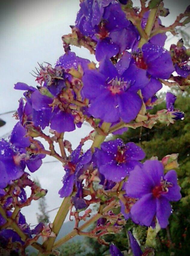 Blue flower..