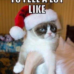 10 x Hilarische memes van de meest chagrijnige kat ter wereld | NSMBL.nl