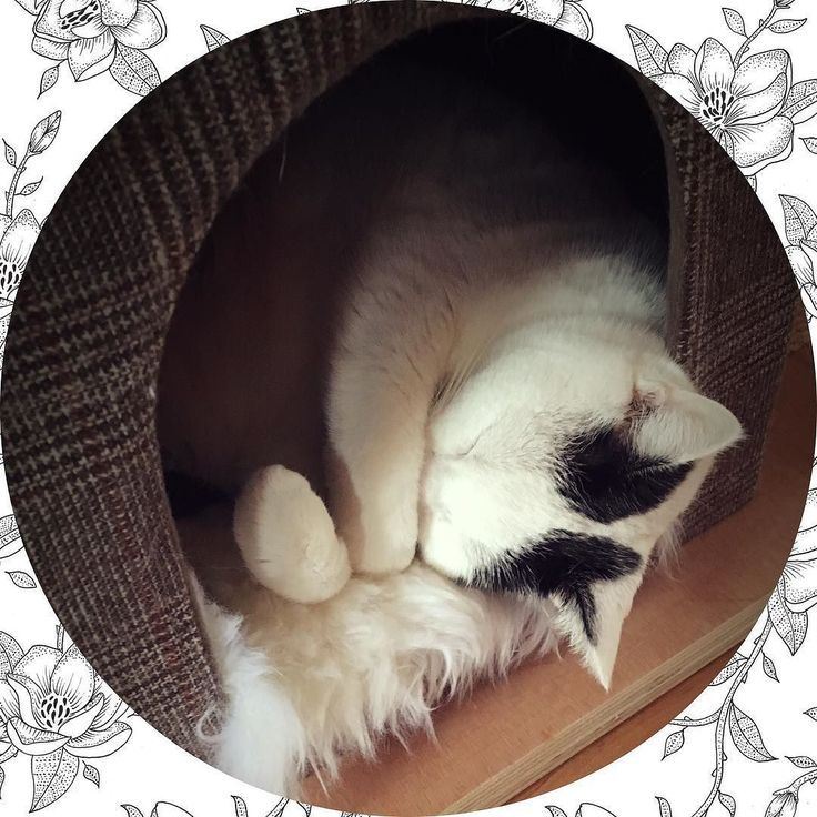 Vrijdag ochtend mood | #goodmorning #cat #cats #cutecat #cute #kat #dutch