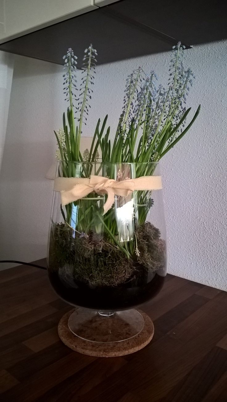 Windglas + Potgrond + Mos + Blauwe druifjes = klaar!  LAAT DE LENTE BINNEN!!!