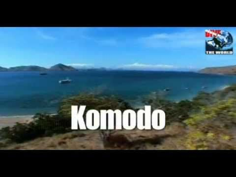 Komodo diving video with manta rays, sharks and the beautiful reefs of K...
