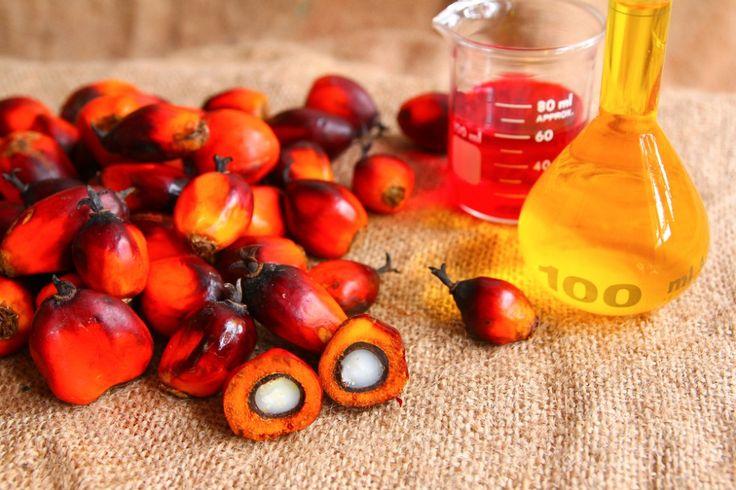 Perché l'olio di palma fa male
