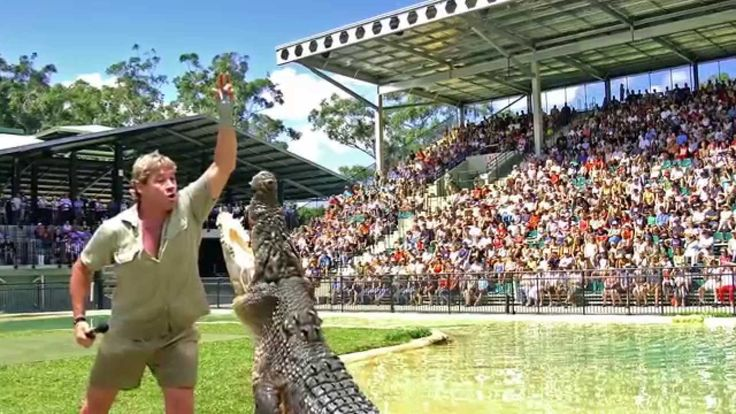 1000+ Images About Steve Irwin On Pinterest