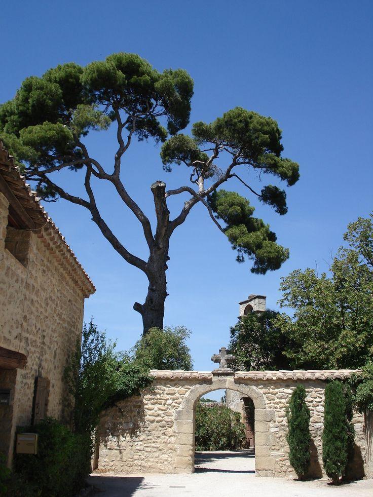 Sainte Cécile Les Vignes, Vaucluse