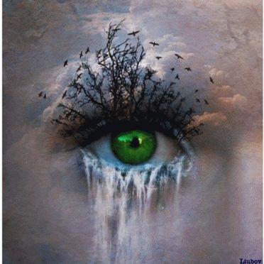 Auge im Wald