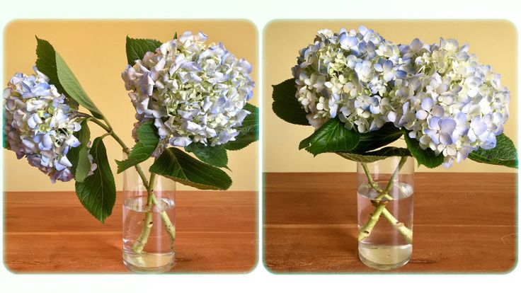 How to Revive Dead Flowers Dying flowers, Wilted flowers