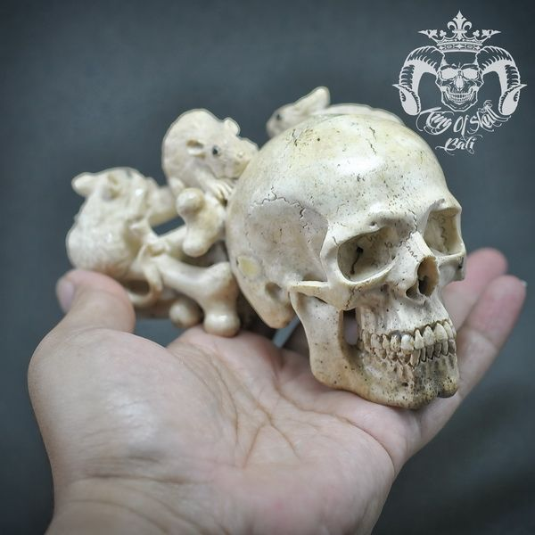 RARE Oddities and One Of Kind  Detailed Hand Carved Real Old Walrus Jaw Bone into Realistic Human Skull With Three Rats Gnawing The Bones