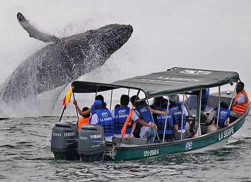 Whale season in the Pacific Ocean, Valle del Cauca, Colombia