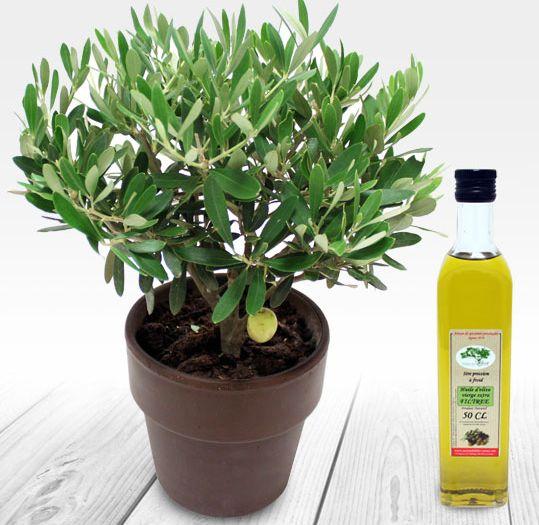 1000 id es sur le th me olivier en pot sur pinterest - Maladie de l olivier en pot ...
