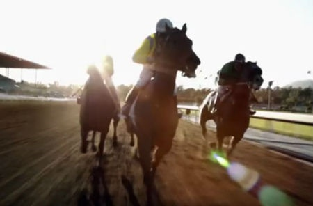 If We Don't Kill Horses for TV, Why Kill Them for Gambling?  In 2008, an Associated Press inquiry found that thoroughbred racetracks reported three horse deaths per day in 2007 and a total of 5,000 since 2003...