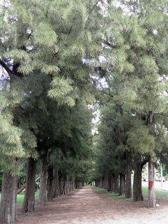 Camino de las Casuarinas.