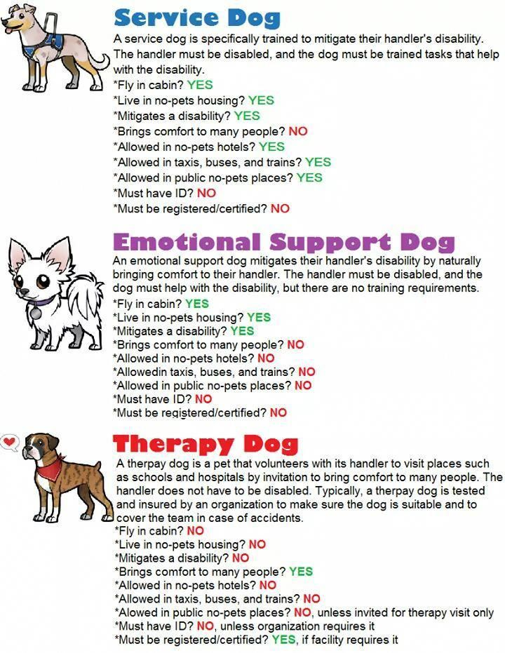 Pin On Dogs Training And Nutrition