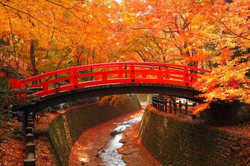 """坂井直樹の""""デザインの深読み"""": 「そうだ京都、行こう」のコピーで誘惑する紅葉の観光広告はシズル感が溢れ、ホテルが取れないし大渋滞でタクシーも動かない。しかし中国は赤色がアイデンティティのはずが、なぜか?紅葉ではなくこれは黄葉だ。"""