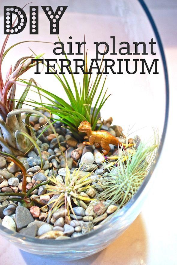 Easy DIY Air Plant Terrarium via http://lifeovereasy.com/ #diy #cheap