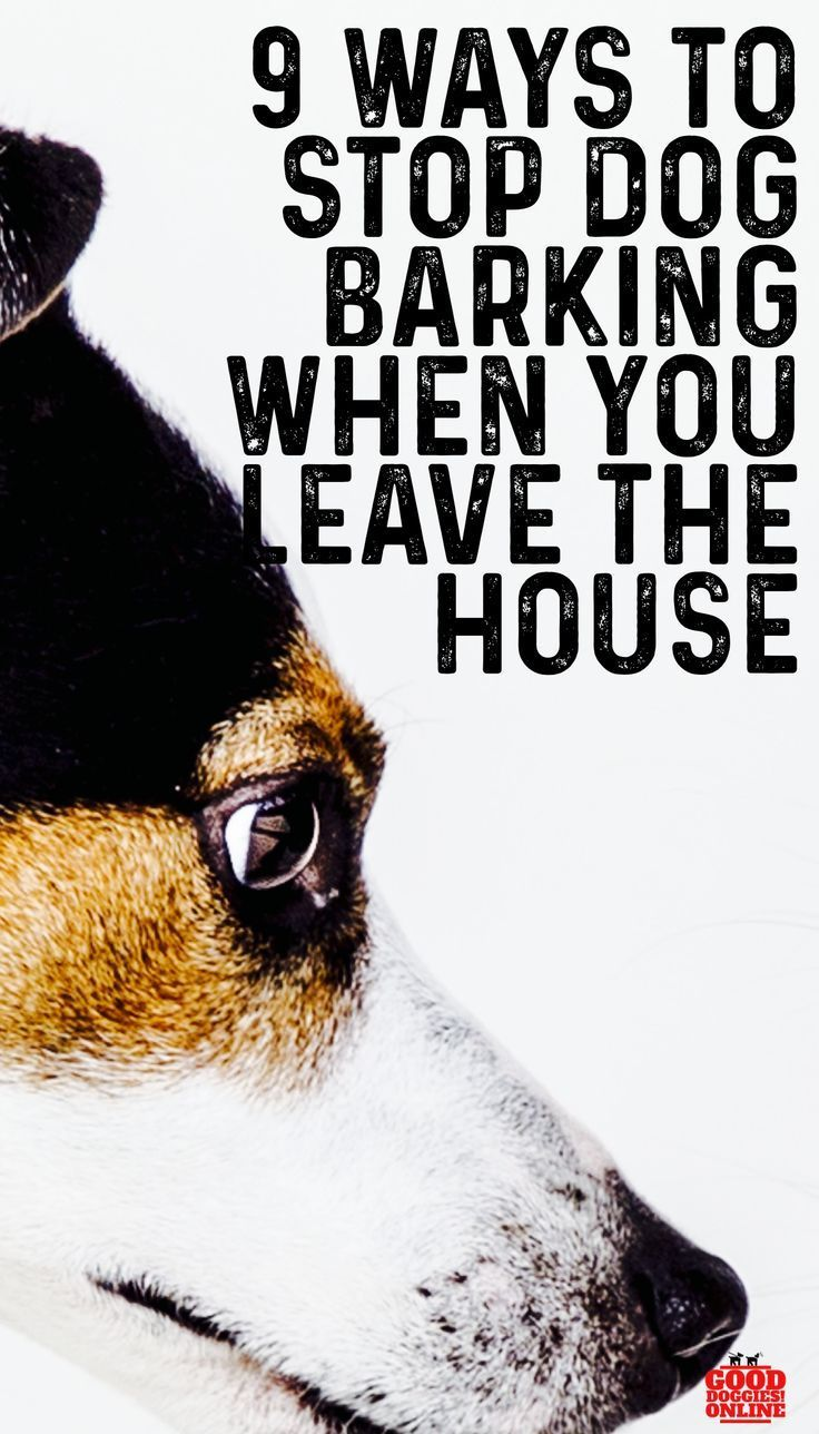 How To Stop A Dog From Barking When You Leave House In 2020 Dog Training Easiest Dogs To Train Stop Dog Barking