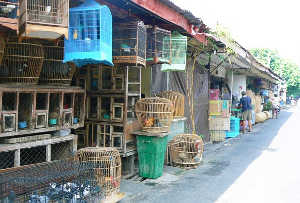 It's a little bit smelly but a fun place to visit if u want to buy a bird. Bird Market in Denpasar, Bali     www.travelling-bali.com