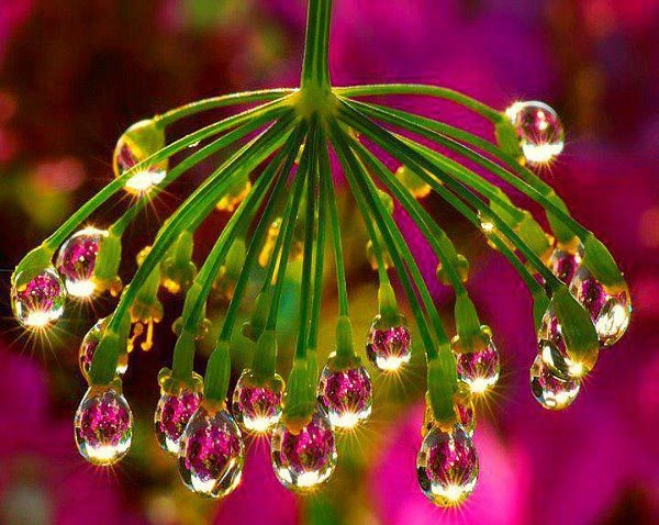 Pink drop of waters — #MindBodySpirit. Brought to you by SunGoddess Magazine: Igniting the Powerful Goddess WIthin http://sungoddessmagazine.com: Http Sungoddessmagazine Com, Http Sungoddessmagazin Com, Pink Drop, Mothers Earth, Los Flore, Amazing Places, Sungoddess Magazines, Power Goddesses