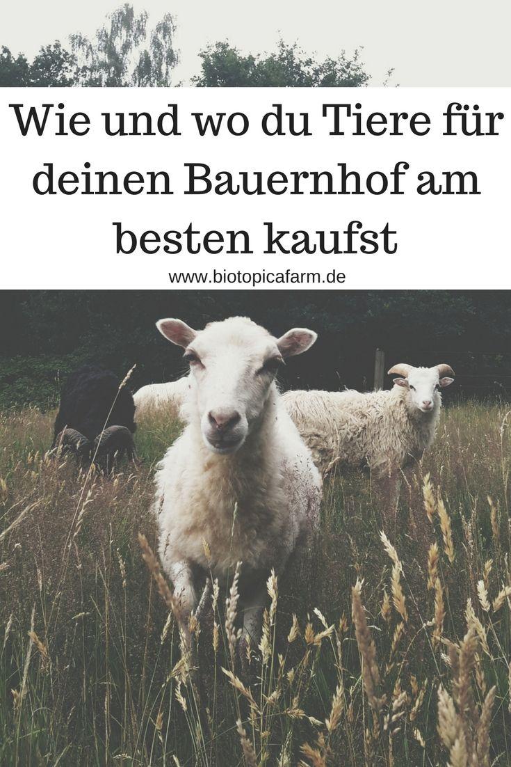 So kommst du an günstige und seltene Tiere für deinen Bauernhof #selbstversorgung #permakultur #autark