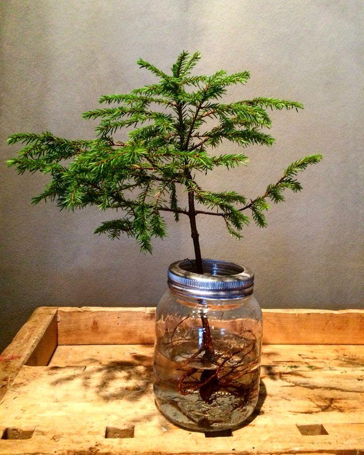 Jultre i norgesglass