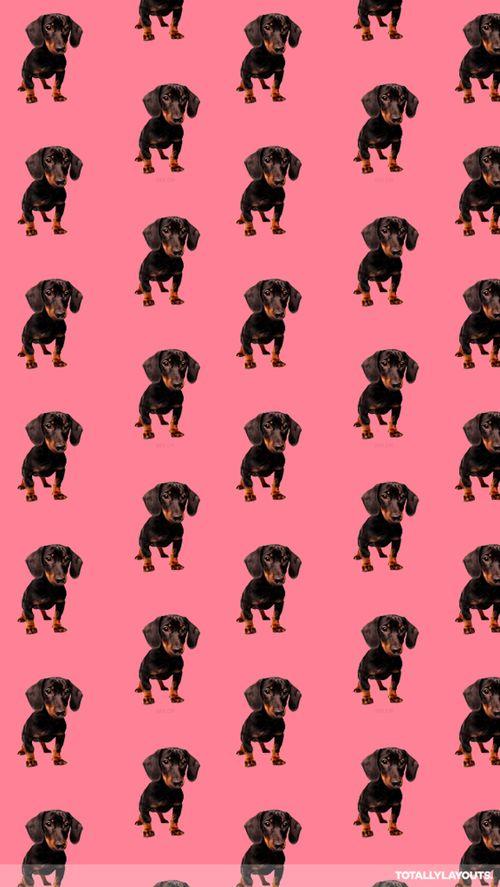 34 best dachshund wallpaper! images on pinterest | dachshunds