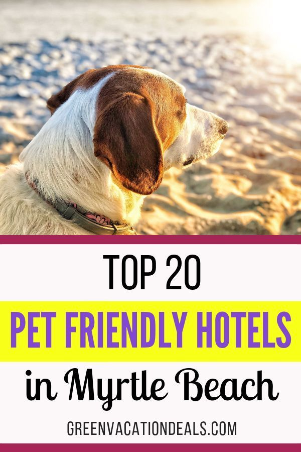Top 20 Pet Friendly Hotels In Myrtle Beach Myrtle Beach Hotels Pet Friendly Hotels Beach Photos