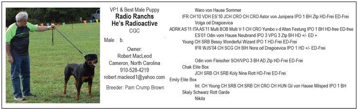 VP1 & Best Male Puppy Radio Ranchs He's Radioactive, CGC Owner: Robert MacLeod Cameron, North Carolina 910-528-4219 robert.macleod1@yahoo.com Breeder: Pam Crump Brown