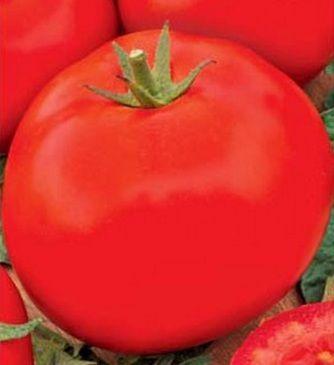 Сорт томата (помидора) Аида описание фото отзывы