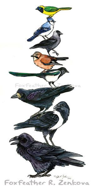A beautiful, whimsical painting of a totem pole of corvids - stacked one on top of the other!    Each of the birds represents a different species from the family Corvidae. From top to bottom: Green (Inca) Jay, Blue Jay, Jackdaw, Eurasian Jay, Magpie, Rook, Pied Crow, and Raven.    This print would be a great gift for any crow or raven lover, or look great hanging on your wall!    This is a high quality, archival photo print. The image is approximately 5x11 on a sheet of 8 1/2 x 11 heavy…