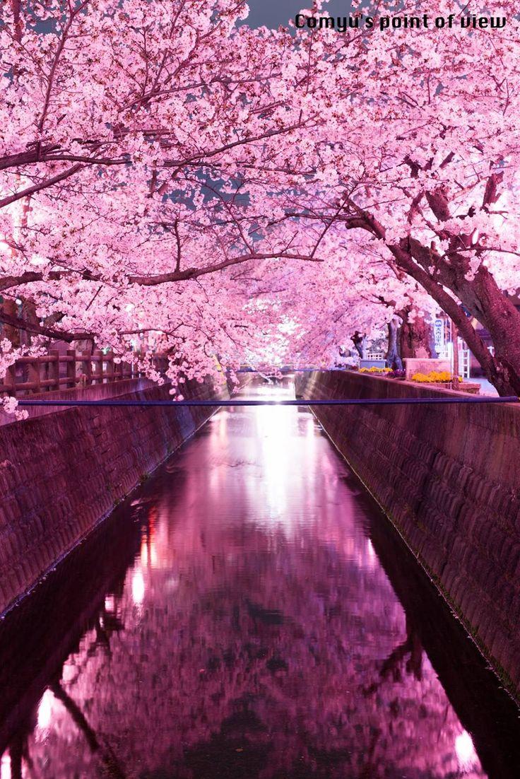 十四川、四日市市 東京カメラ部 Popular:Matsuoka Comyu   #桜 #CherryBlossom