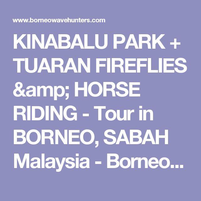 KINABALU PARK + TUARAN FIREFLIES & HORSE RIDING - Tour in BORNEO, SABAH Malaysia - BorneoWavehunters Tours