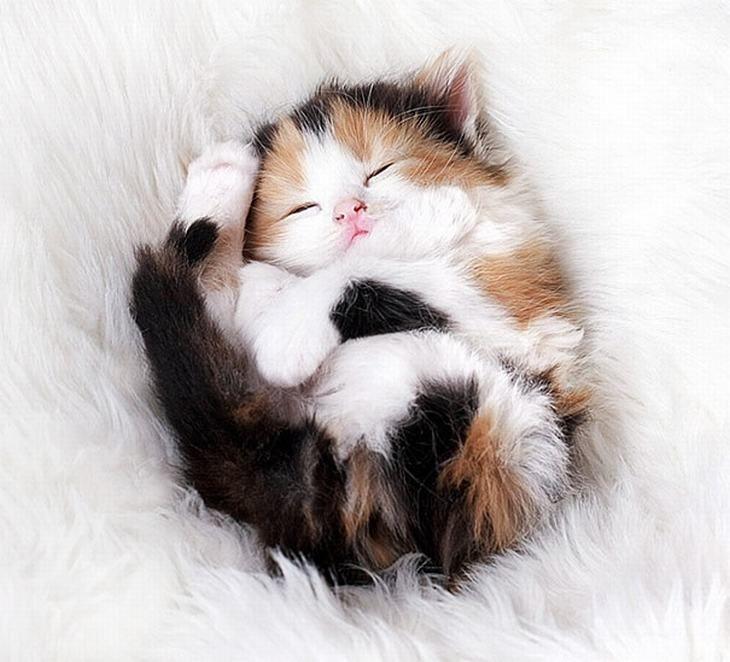 20 gatinhos fofos                                                                                                                                                                                 Mais