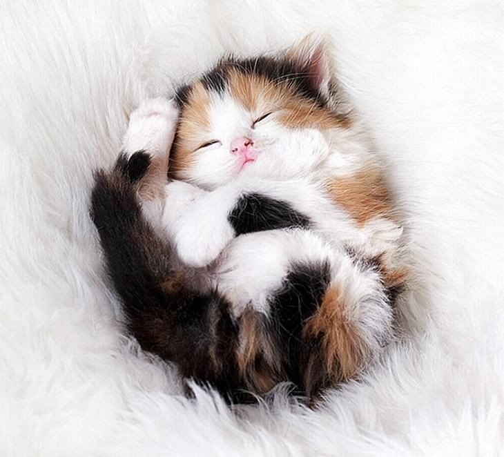20 Tiernos Gatitos | Momentos dulces - Todo-Mail                                                                                                                                                                                 More