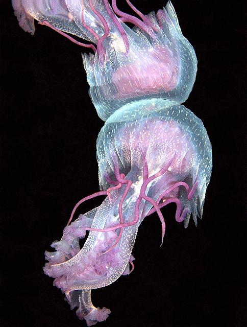 #jellyfish #tentacles